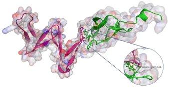 Molecular Docking